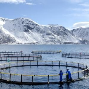 daily-scandanavian-norwegian-seafood-farm